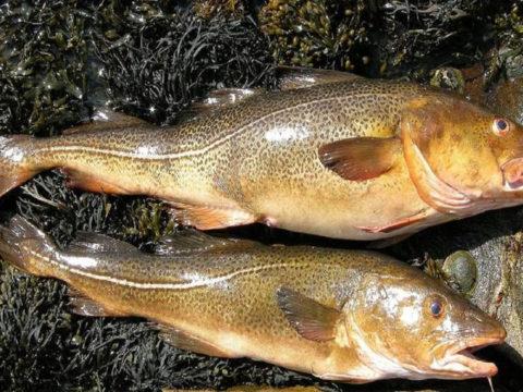 6 Jenis Ikan ini Memiliki Kandungan
